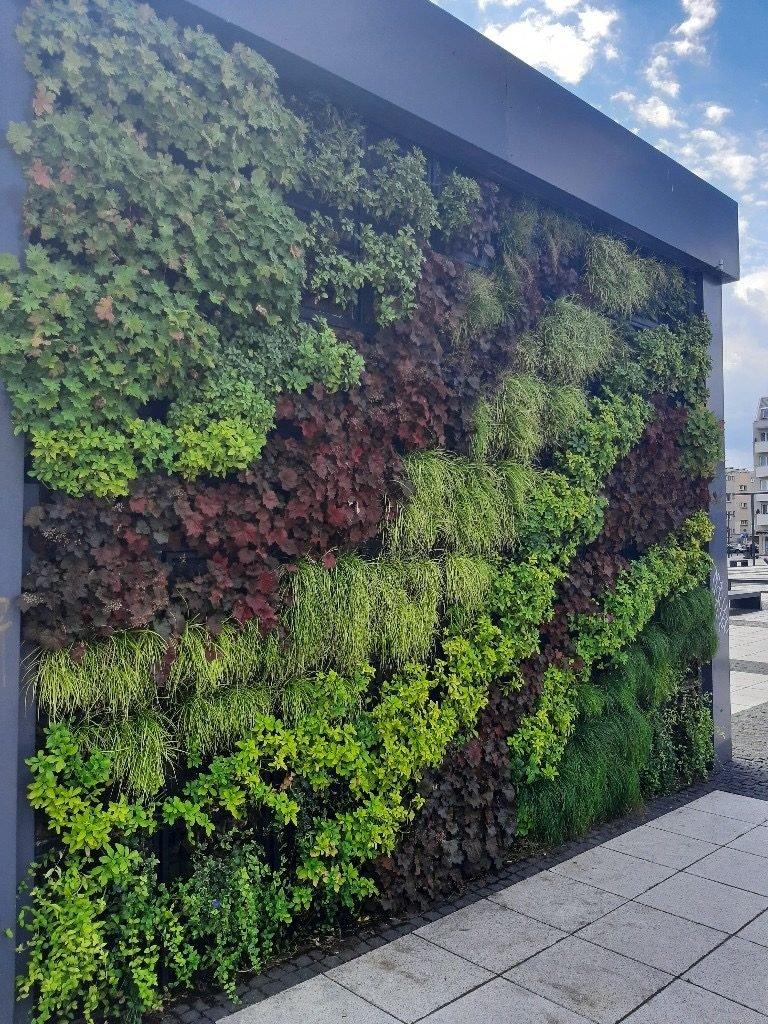 Zielona ściana we Wrocławiu, fot. ZIDA