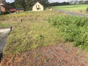 ZIDA dach zielony jednowarstwowy w uprawie ekstensywnej