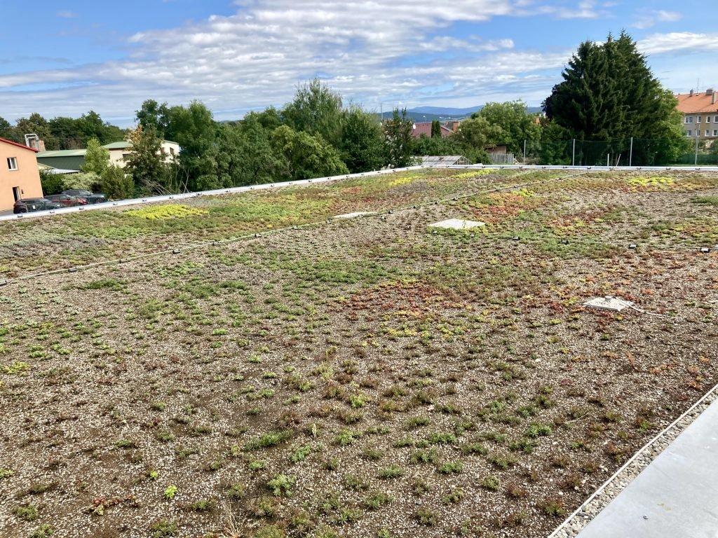Lightweight green roof covered by sedum seedlings.
