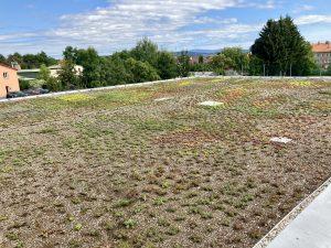 Dach zielony lekki