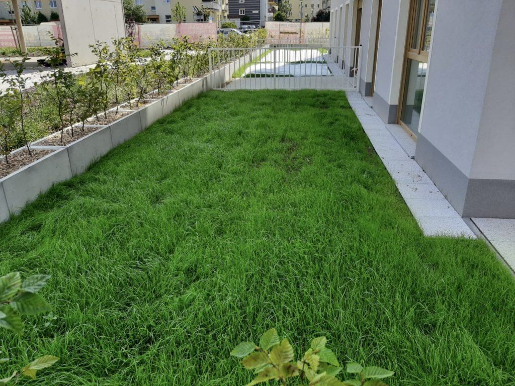 The green roof lawn growing on our substrate - Zatorska Wrocław